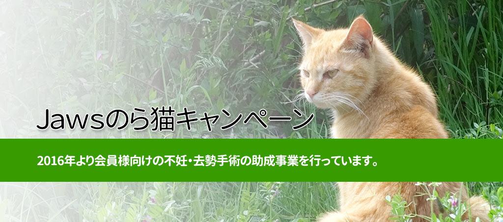 JAWSのら猫キャンペーン